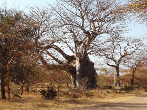 5 - Sénégal  3