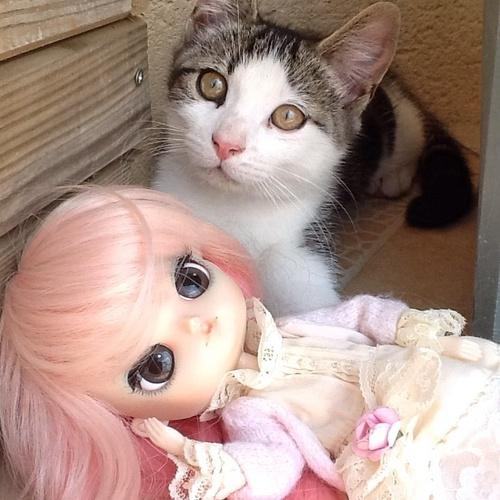Avec les chats