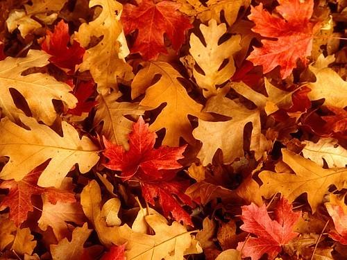 fond ecran automne 060