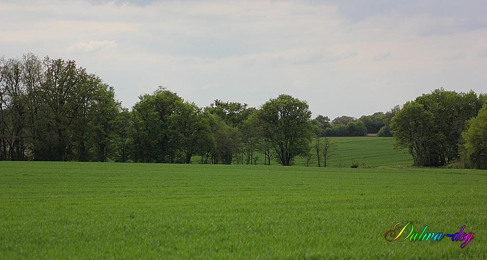 promenade dans les champs