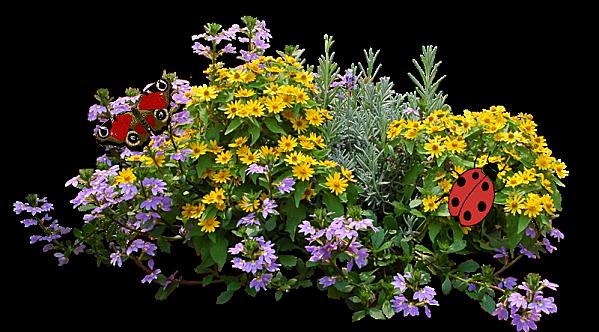 Barre sép. feurs jaune-violette coquecinelles TB 8-2 3