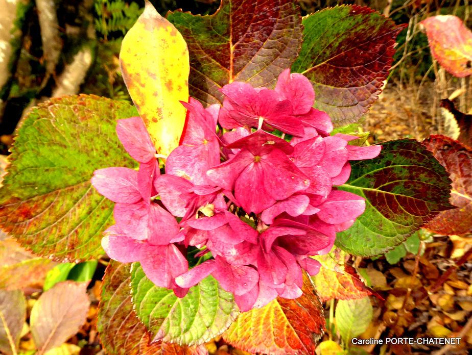 *Impressions d'automne à la Promenade fleurie
