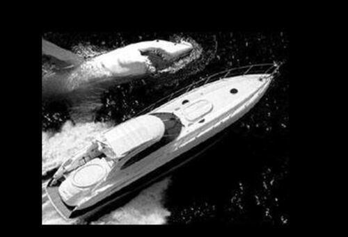 Le mystère du commandant cousteau...