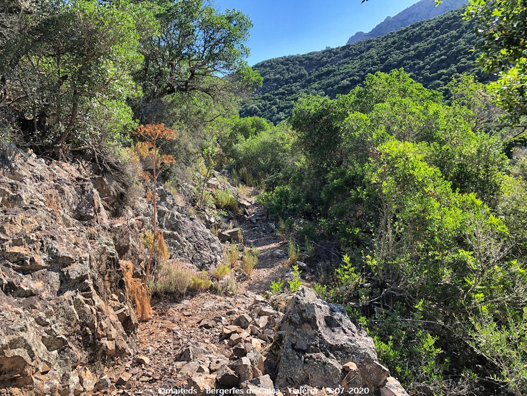 Sur le sentier des bergeries de Calca - Galéria