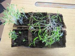TPS/PS/ Projet jardinage / Jardinière de plantes aromatiques