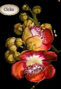 Virágok . 3.