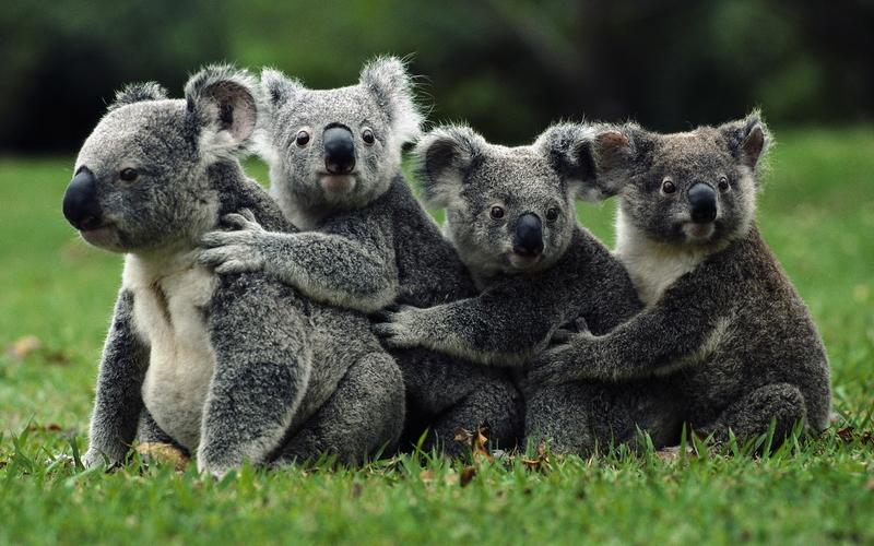 20 photos d'animaux - 9