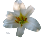nature-arome-fleurs-nature-big.png
