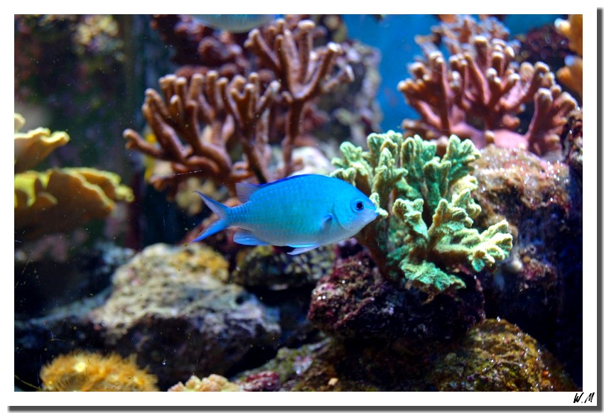 Photos poissons