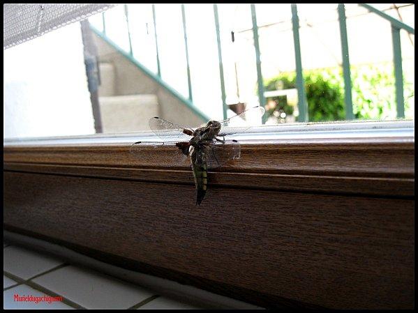 Insectes 1147 (Copier)