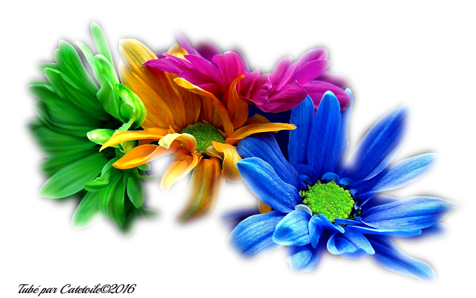 Mes Tubes Fleurs Série 2