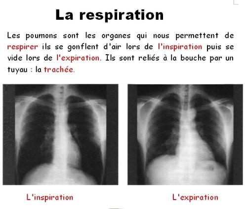 La respiration 1