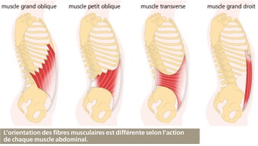 Info MUSCLES abdominaux
