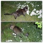 Fleurs blanches dans la nuit et chats