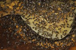 Voyage au pays de l'abeille