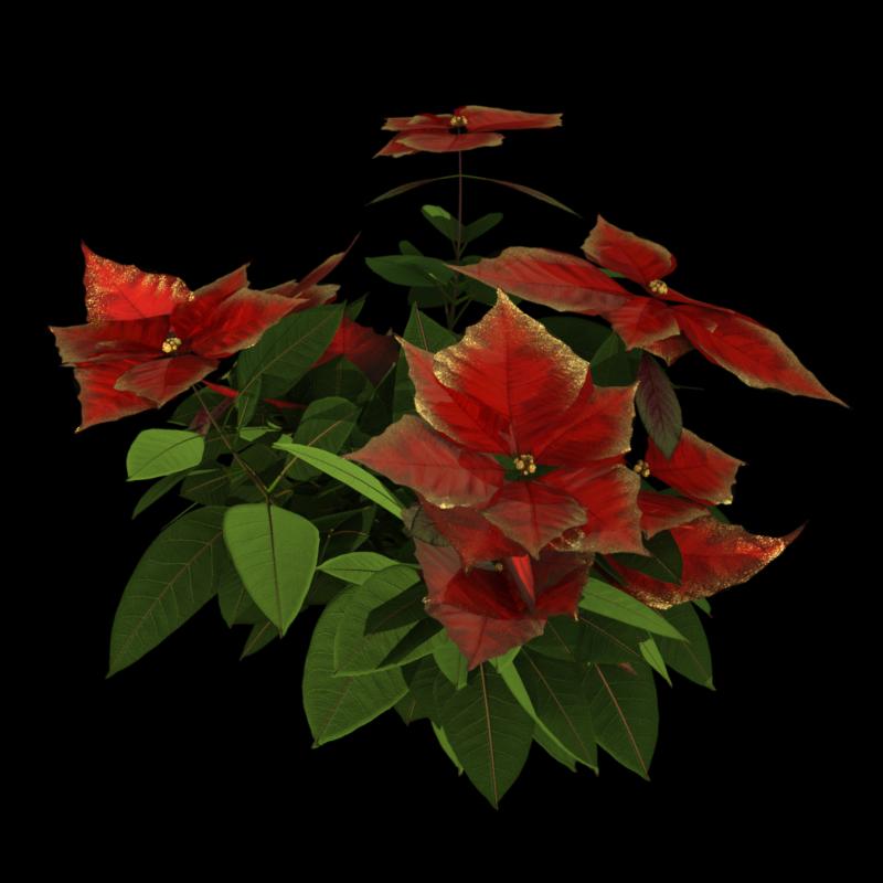 "Tube de fleurs ""Poinsettia"" rouge (render-image)"