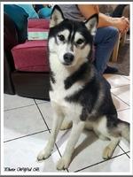 Leïka (3,5 ans)