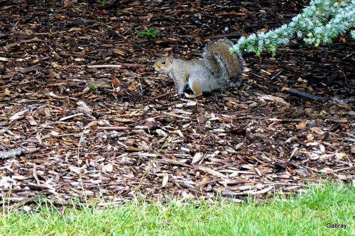 L'écureuil et le pigeon ...