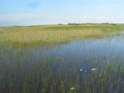 Patrimoine mondial de l'Unesco : Le parc national des Everglades - Etats-Unis