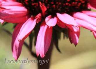 Jardin / Encore les fleurs !