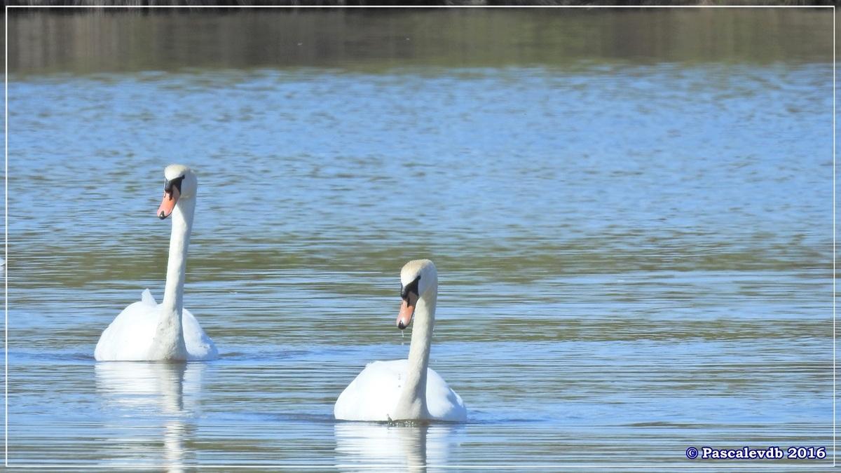 Printemps à la Réserve ornitho du Teich - Avril 2016 - 5/12