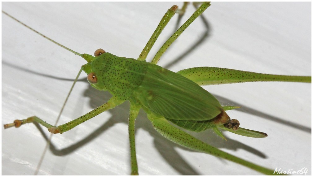 Insectes-04-7301.JPG