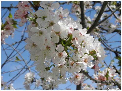 Fleurs printannières