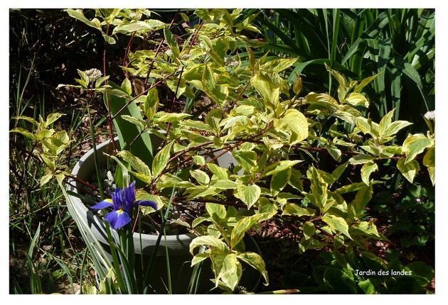 Joli mois de mai dans le jardin.