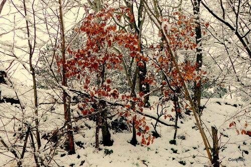 Temps de neige (3)