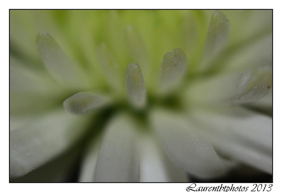 Essai gouttes et fleurs en macro...