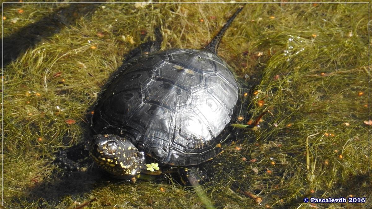 Réserve ornitho du Teich - Août 2016 - 1/12