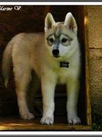 Jaïa (3 mois)