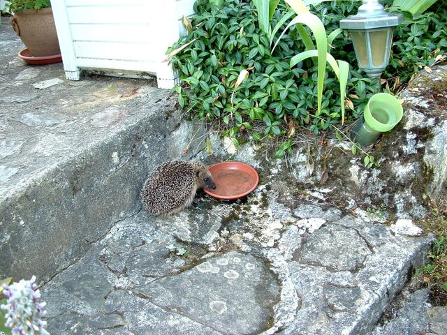 Jardin et potager,les astuces de Grand-Mère