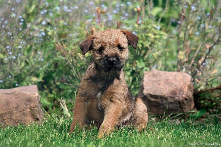 Résultats de recherche d'images pour «chien dans les fleurs pinterest»