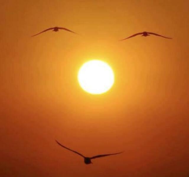 Nouvelles soleil mouettes