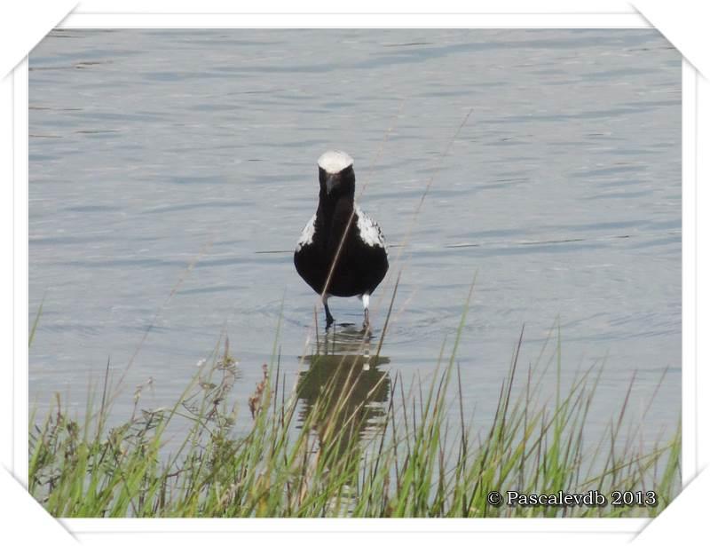 Symphonie printanière à la réserve ornithologique du Teich - 14/20