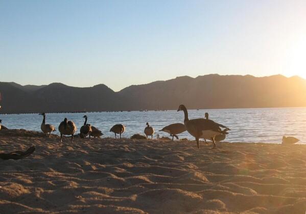 Lake-Tahoe-023.jpg