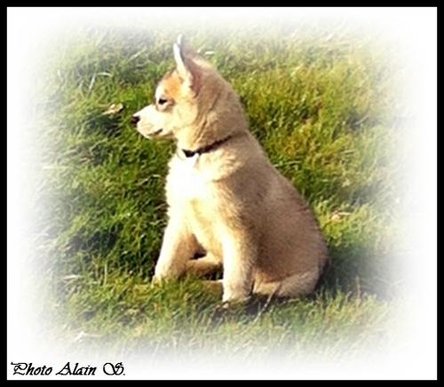 Irko (2,5 mois)