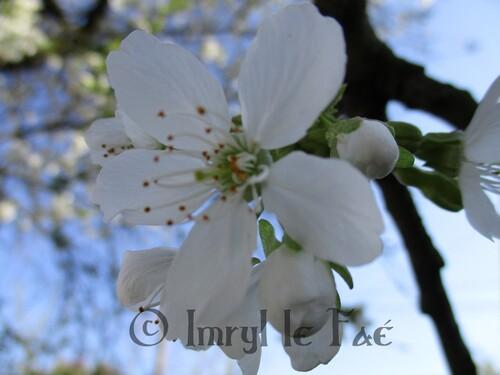 Fête des Floraisons Partie 1