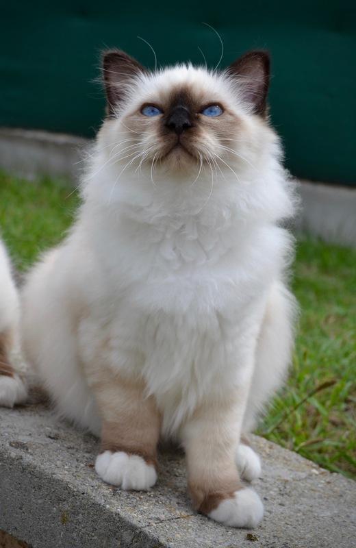 Evolution des chatons