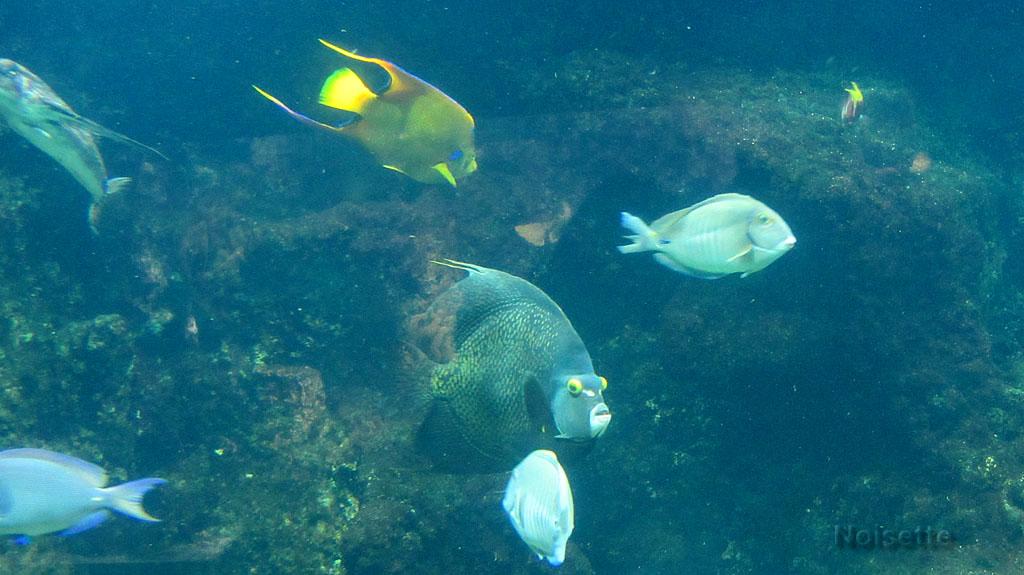 Aquarium de la Rochelle (3)