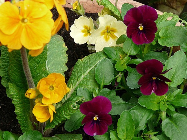 18-03-2011-029.jpg
