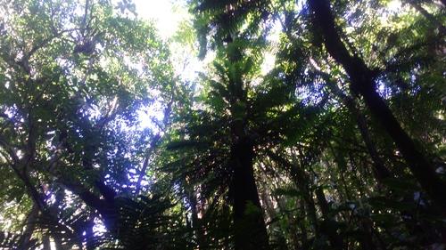 La Forêt de Bon Accueil