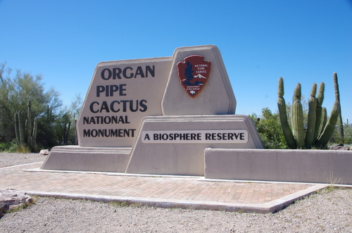 Jour 13 - Organ Pipe Cactus National Monument Arizona