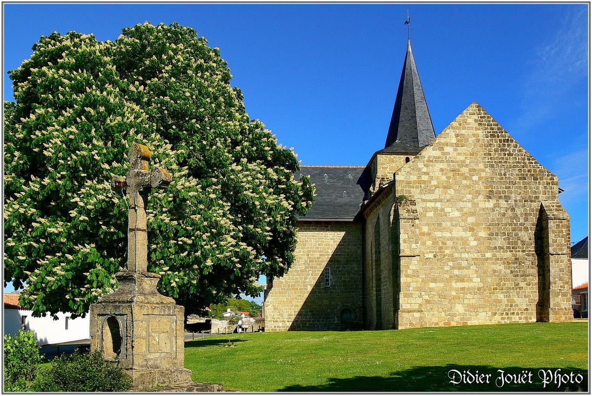 (85) Vendée - Sallertaine (3)