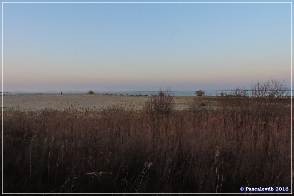 Port du Rocher et prés salés est - La Teste de Buch - Février 2016 - 11/12