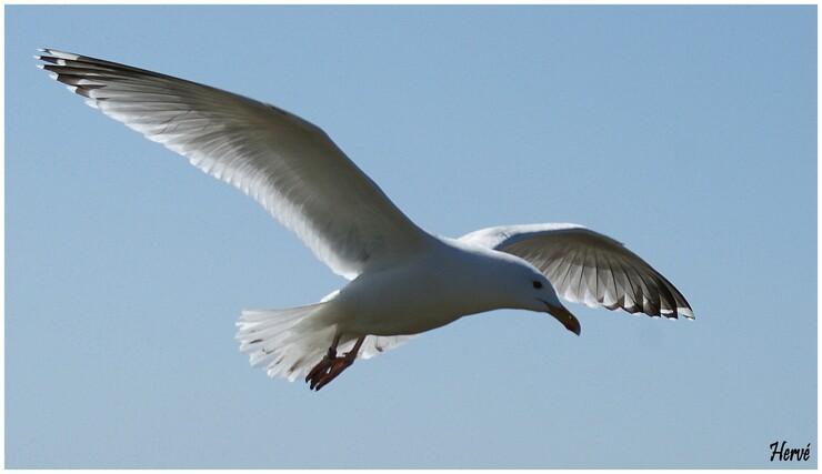 Les oiseaux sur l'Île Grande.