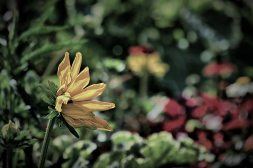 Bokeh fleuries.