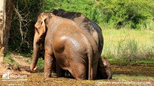 La crotte d'éléphant ...