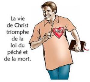LA LOI DE LA VIE  par Chip Brogden